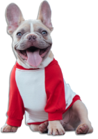 puppi-lovers-free-trial-puppi-lovers-subscription-puppi-lovers-member-plans