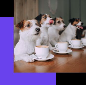 Online-Dating-App-Meet-Singles-Online-Puppi-Lovers-Membership-Puppi-Lovers-Partner-Member-Benefits